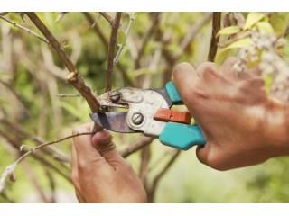 Как правильно обрезать деревья. Обрезка плодовых деревьев